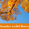 Xtend Shared Branching marketing materials are now available!